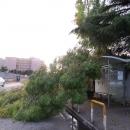 alberi_a_napoli_dopo_la_tempesta.jpg
