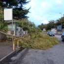 alberi_a_napoli_dopo_la_tempesta2.jpg