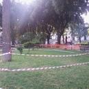 alberi_a_napoli_dopo_la_tempesta3_piazza_salvatore_di_giacomo.jpg