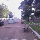 alberi_a_napoli_dopo_la_tempesta3_piazza_salvatore_di_giacomo2.jpg