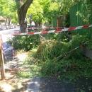 alberi_a_napoli_dopo_la_tempesta3_via_petrarca.jpg