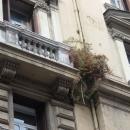 maltempo_crollo_a_via_guglielmo_sanfeliceerbacce__infestano_il_palazzo2.jpg