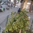 a_a_a_a_capodanno_della_vergogna_abbattuto_albero_dedicato_a_enzo_cannavale2.jpg