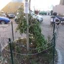 a_a_a_a_capodanno_della_vergogna_abbattuto_albero_dedicato_a_enzo_cannavale3.jpg