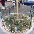 piazza_carolina_della_vergognaaiuola_della_vergogna.jpg
