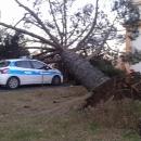 maltempo_albero_si_abbatte_sull_auto_della_polizia_municipale.jpg