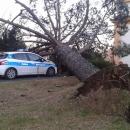 maltempo_albero_si_abbatte_sull_auto_della_polizia_municipale_2.jpg
