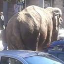 1_circo_a_melito_elefante_circola_tra_le_strade_per_pubblicizzarlo.jpg