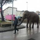 circo_a_melito_elefante_circola_tra_le_strade_per_pubblicizzarlo_3.jpg
